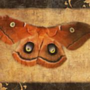 Female Moth Poster