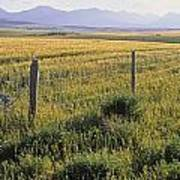 Fence And Barley Crop, Near Waterton Poster