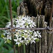 Fence And Flower Poster