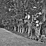 Fence Of Trees Poster