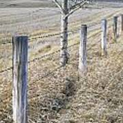 Fenceline And Cropland In Late Fall Poster by Darwin Wiggett