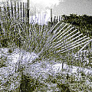 Fences In Duotone Poster