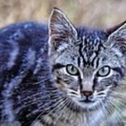 Feral Kitten Poster