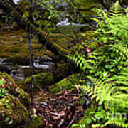 Fern Fallen Log And Stream Poster