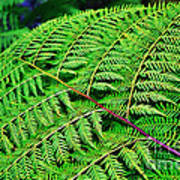 Fern Frond Poster