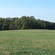 Field At Mount Vernon Poster