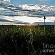 Field Of Alfalfa 5 Poster