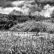 Field Of Cattails II Poster