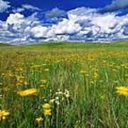 Field Of Flowers, Grasslands National Poster