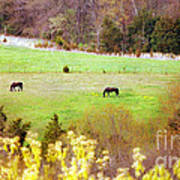 Field Of My Dreams Horses Poster