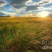 Fields Of Gold Poster by John Kelly