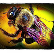 Fierce Bumblebee Poster