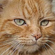 Fierce Warrior Kitty Poster