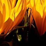 Fiery Sunflowers Poster