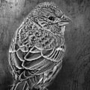 Finch Black And White Poster