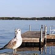Finger Lake Gull Poster