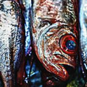 Fresh Fish At The Market Poster