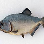 Fish Mount Set 04 A Poster
