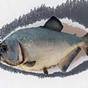 Fish Mount Set 04 C Poster