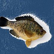 Fish Mount Set 08 C Poster