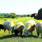 Five Sheep Poster