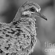 Fledgeling In Bw Poster by Lynda Dawson-Youngclaus