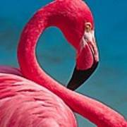 Flexible Flamingo Poster