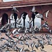 Flight Of Pigeons Inside The Jama Masjid In Delhi Poster