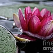 Floating Floral Poster