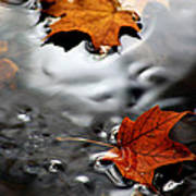 Floating Maple Leaves Poster