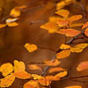 Floating On Orange Fall Leaves Poster