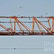 Flock Of Birds Perching On Construction Crane Poster