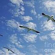 Flock Of Five Seagulls Flying In The Sky Poster by Sami Sarkis