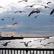 Flocking Gulls Poster