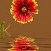 Flooded Beach Flower Poster