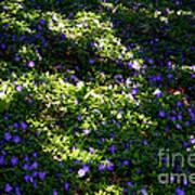 Floral Carpet Poster