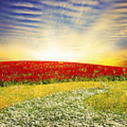 Floral Field On Sunset Poster