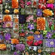 Florals Poster