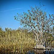 Florida Everglades 8 Poster