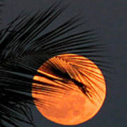 Florida Moonrise Poster
