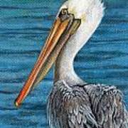 Florida Pelican Poster by Peggy Dreher