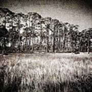 Florida Pine 2 Poster