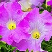 Flower 18 Poster