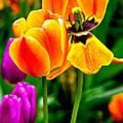 Flower 19 Poster
