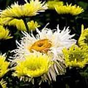 Flower 21 Poster