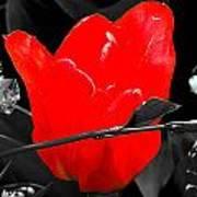 Flower 23 Poster