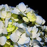 Flower 75 Poster