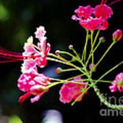 Flower Digital Painting Poster