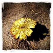 Flower In The Sand Poster