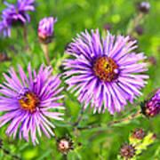 Flower Mania Poster